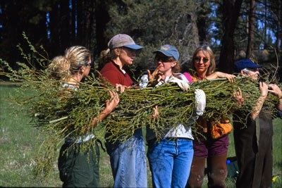 We will keep your private information wrapped up like this willow bundle! Photo: Byron Dudley.