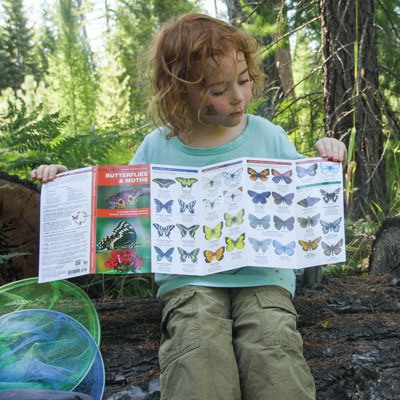 A child learns about butterflies. Photo: Sue Anderson