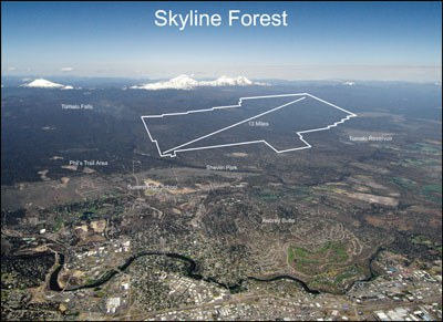 Skyline Forest Aerial view. Photo: Aerial Images