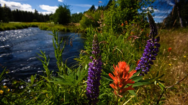 Wildflowers bloom along Spring Creek. Photo: Jay Mather.
