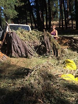 Intern Alice rocking weeds at Camp Polk Meadow Preserve. Photo: Land Trust.