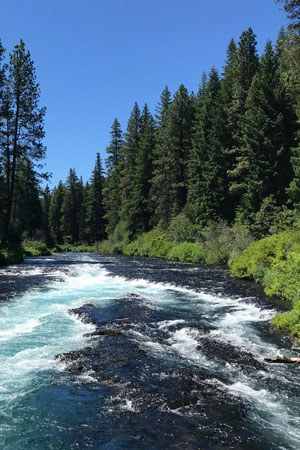 Metolius River. Photo: Joan Amero.