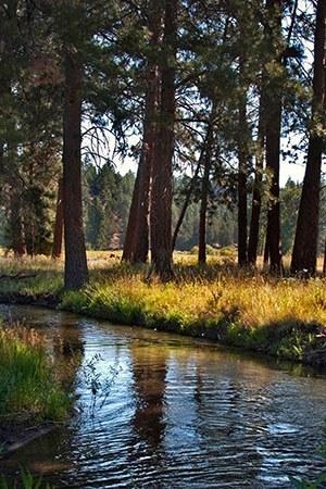 Whychus Creek at Camp Polk Meadow Preserve. Photo: Deb Quinlan.