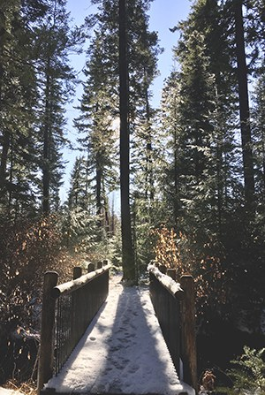 A light snow dusts a bridge at the Metolius Preserve. Photo: Land Trust.