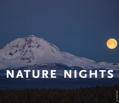 2021_nature-nights_just-name388x336px_sized.jpg