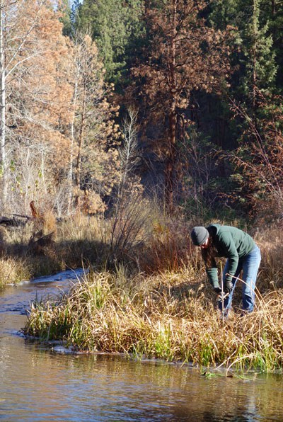 A volunteer plants willow cuttings along the banks of Whychus Creek. Photo: Land Trust.