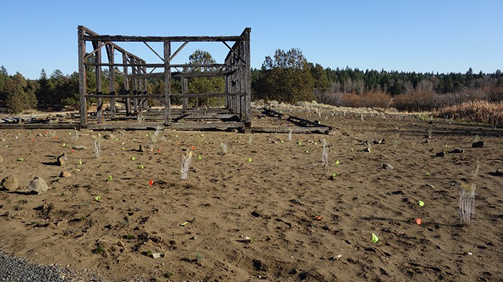 The Hindman barn today with new native plants! Photo: Land Trust.