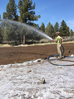 A volunteer helps wet the soil to prepare for soil solarization. Photo: Land Trust.
