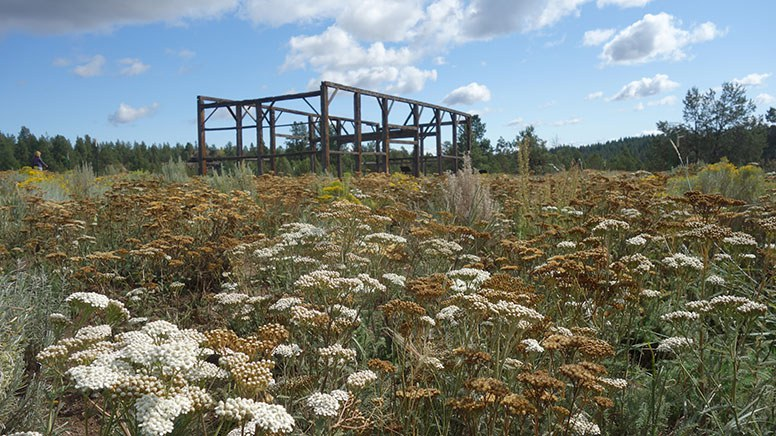 The Hindman barn in September 2019 with lots of flourishing native plants. Photo: Land Trust.