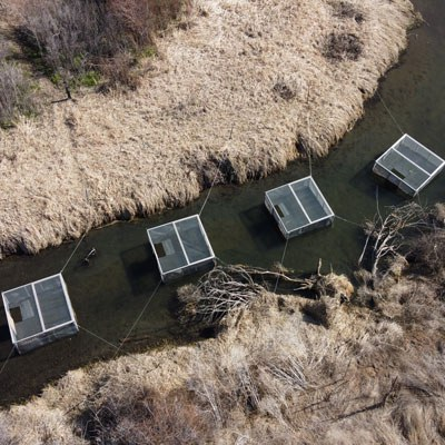 Fish in screened boxes acclimate to Ochoco Creek at Ochoco Preserve. Photo: Land Trust.