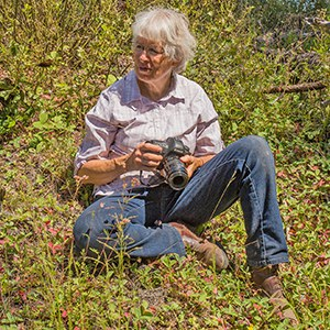 Sue Anderson takes photos of butterflies at Skyline Forest. Photo: Jim Anderson.