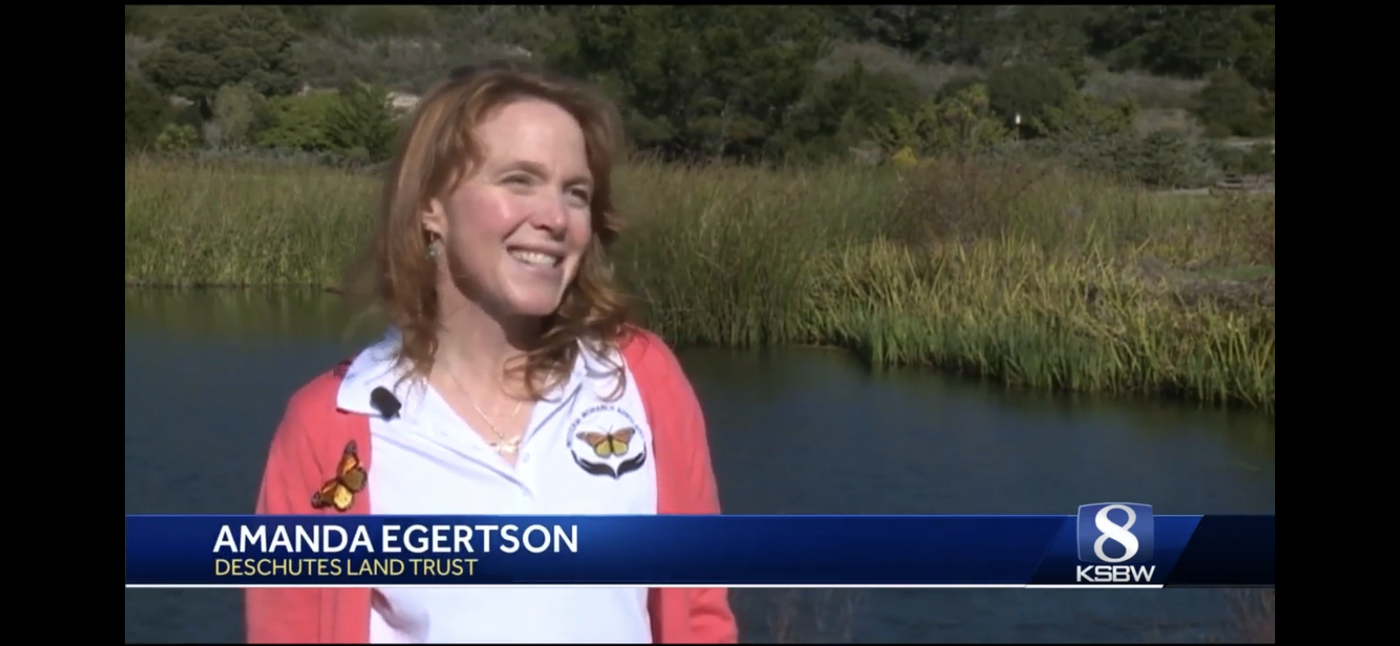 Amanda Egertsons talks butterfly conservation in an interview with KSBW News.