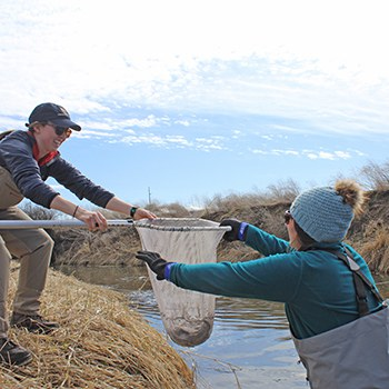 Adding spring Chinook smolts to the live cars at Ochoco Preserve in early 2020. Photo: Land Trust.