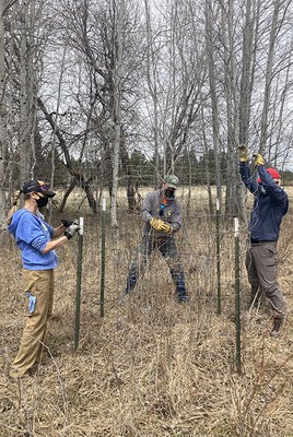 Volunteers create enclosures to protect aspens at Indian Ford Meadow Preserve. Photo: Land Trust.