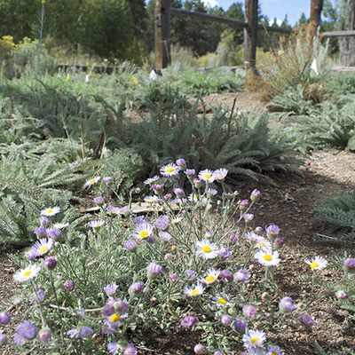 Flowers blooming in the first phase area of the native plant restoration. Photo: Land Trust.