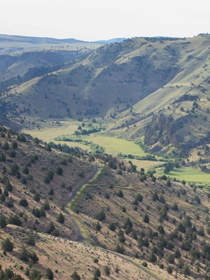 The Land Trust is working on restoring some of the fields at Priday Ranch. Photo: Ryder Redfield.