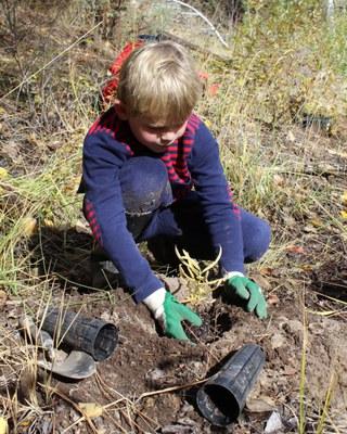 New milkweed will attract monarchs. Photo: Land Trust.