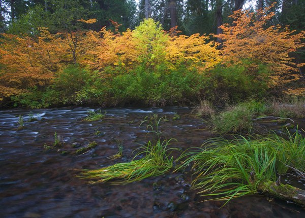 Layers of color at the Metolius Preserve. Photo: Jay Mather.