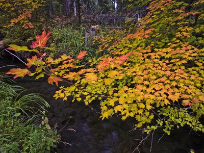 Brilliant color along Lake Creek. Photo: Jay Mather.