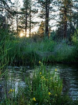 Whychus Creek meanders through Camp Polk Meadow Preserve. Photo: Ryder Redfield.