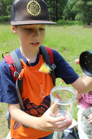 Large bug jars can be helpful for examining butterflies. Photo: Land Trust.