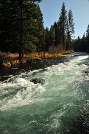 The Metolius River at Wizard Falls. Photo: Byron Dudley.