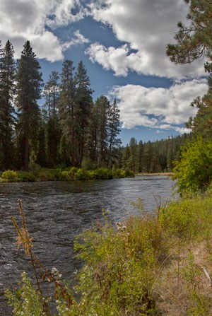 The Metolius River in late summer. Photo: Jay Mather.
