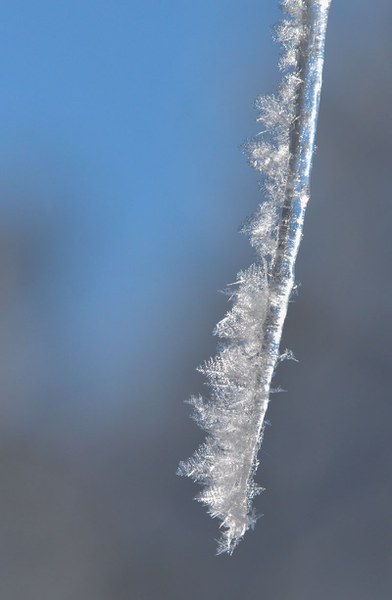 A beautiful icicle with hoarfrost. Photo: Kris Kristovich.