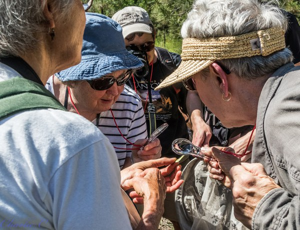 Hikers observe a butterfly through hand lenses. Photo: Charlie Chaffee.