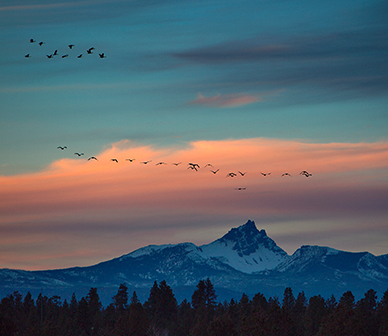 Geese fly above 3 Fingered Jack in the winter. Photo: Jay Mather.