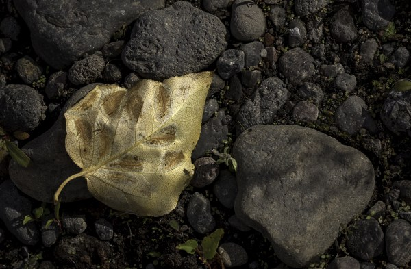 Leaf continues to change color on the forest floor. Photo: Kris Kristovich