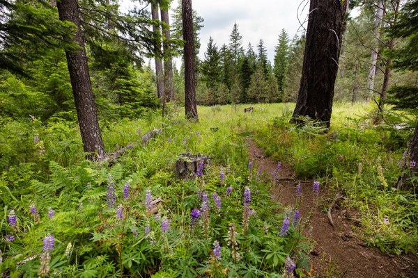Plants blossom in the Metolius Preserve. Photo: Tyler Roemer