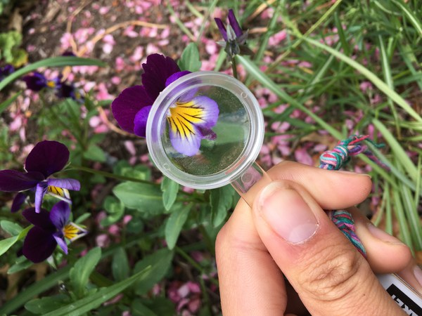 Using a hand lens to look closer at a flower. Photo: Land Trust.