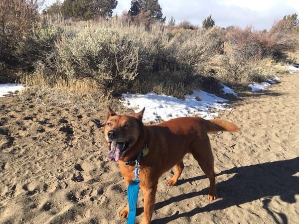 A good dog enjoying the trail while on leash. Photo: Land Trust.