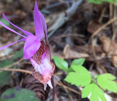 Susan_Primak.MP_2019_05_30_orchid_lead.jpg