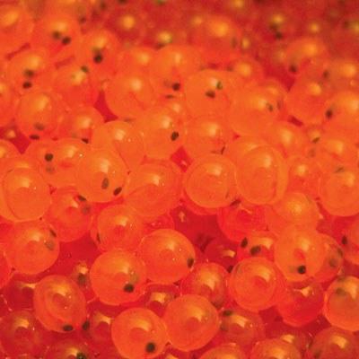Sockeye eggs. Photo: Debbie Frost, NOAA