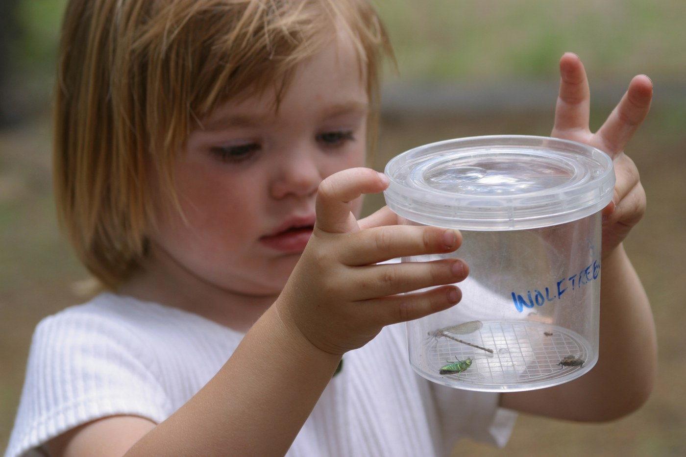Small child looks at a bug caught in a display jar. Photo: Chip Belden.