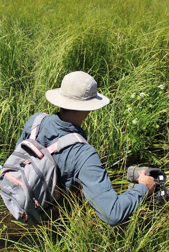 Sometimes monitoring takes you deep into a grassy creek. Photo: Land Trust.