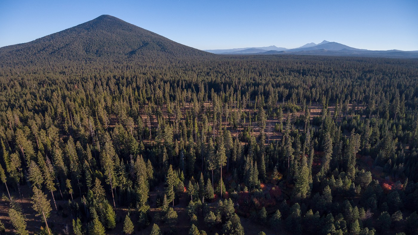 View of the mountainscape beyond the pine forest at the Metolius Preserve. Photo: Tim Cotter.