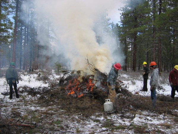Crew works to burn restorative thinning at the Trout Creek Conservation Area. Photo: Land Trust.