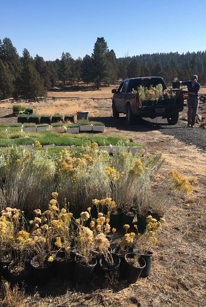 Planting native pollinator friendly plants is a great way to help monarchs. Photo: Land Trust.
