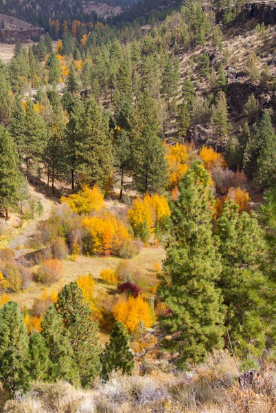 Glimpsing the fall colors on the valley floor at Whychus Canyon Preserve. Photo: Marlin Kontje.