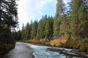The beginning of fall brings out blues, greens, yellows, reds, and oranges along the Metolius River. Photo: Land Trust.