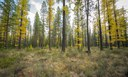 Light shines through the multicolor forest at the Metolius Preserve. Photo: Tim Cotter.