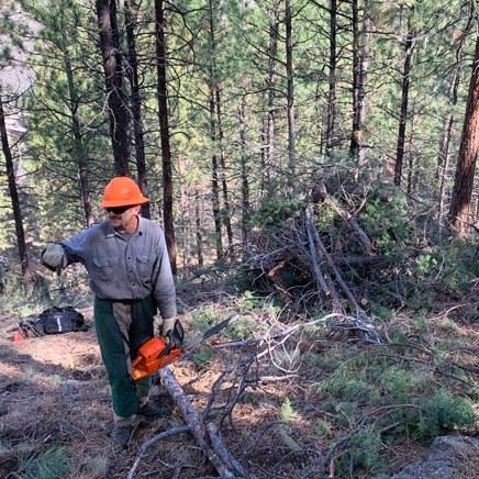 Tree thinning at Aspen Hollow Preserve. Photo: Land Trust.