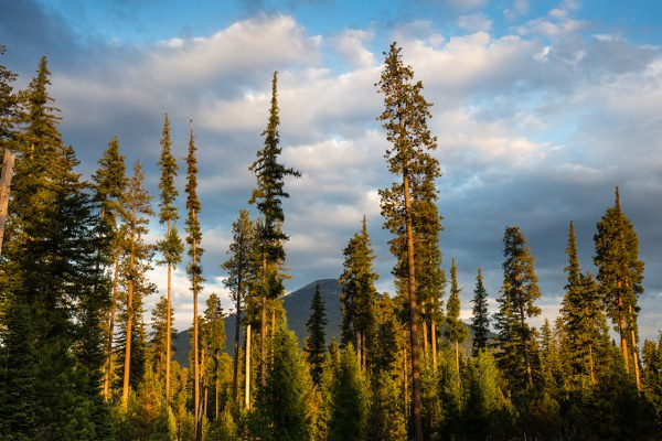Black Butte stands above the forest. Photo: Tyler Roemer