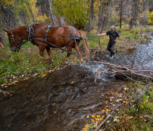 Harry the Horse moves logs into Whychus Creek to improve fish habitat. Photo: Jay Mather.