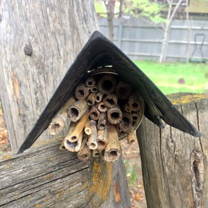 A simple stem bundle bee home using bamboo, an aluminum can, and a starter pot for a roof. Photo: Land Trust.