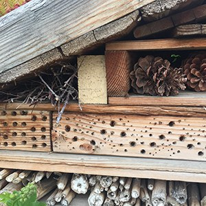 Drilled wood block bee homes within a pollinator hotel at Worthy Brewing. Photo: Land Trust.