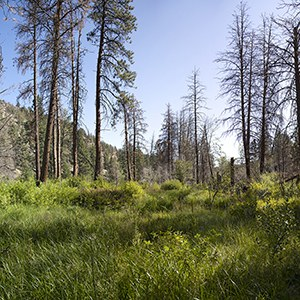 Lush vegetation begins to replace drier ponderosa pines. Photo: Jay Mather.